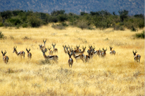 Namibia has been a symbol of success for sustainable hunting programs.